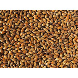 Crisp Brown Malt (EBC 110-135)
